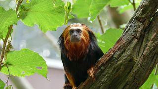 Os dados climáticos contribuem para identificar as prioridades da proteção da biodiversidade