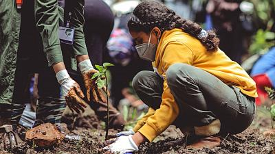 Tree planting is good, but is it the best solution?