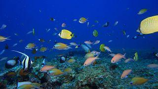 Seychelles : plongée dans un écosystème méconnu et fragile