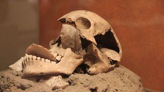 Mexico City'de yer alan Ulusal Antropoloji Müzesi'nde bulunan Astek dönemine ait bir kafatası.