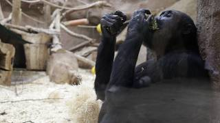 شاهد: حديقة الحيوان ببراغ  تطلق حملة تبرعات.. كلٌ يطعم حيوانه المفضل