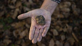 Italie : la truffe ne connaît pas la crise (sanitaire)