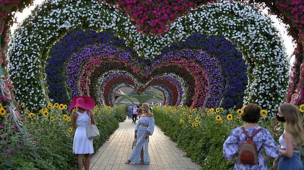 """Le """"Miracle Garden"""" (""""jardin miracle"""") est un jardin botanique à Dubaï, ouvert au public entre novembre et mai. Photo prise le 11/11/2020"""