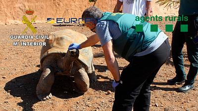 A giant tortoise seized by the Spanish police.