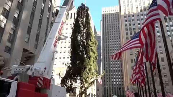Áll már a fenyőfa a Rockefeller Központ előtt