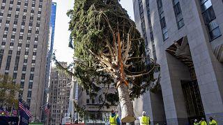 Vorweihnachtliche Stimmung im Big Apple: Vor dem Rockefeller Center steht jetzt der traditionelle Weihnachtsbaum