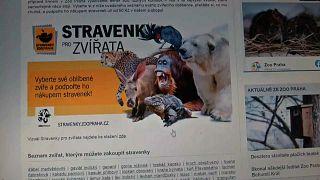 Страница сайта пражского зоопарка