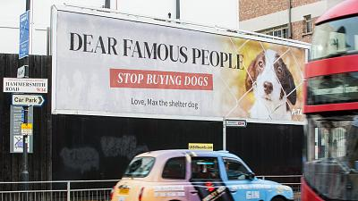 PETA billboard urges celebrities to stop buying dogs and adopt instead