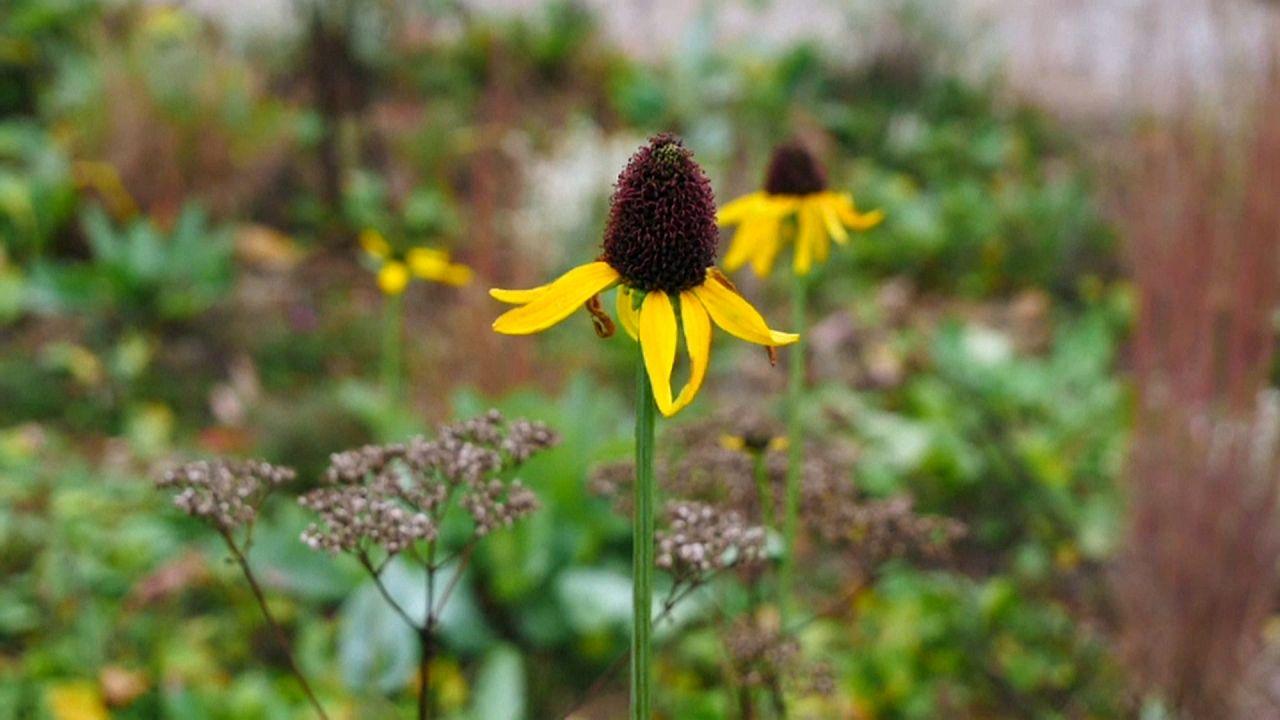 Letzte Blumen in den Gärten der Welt