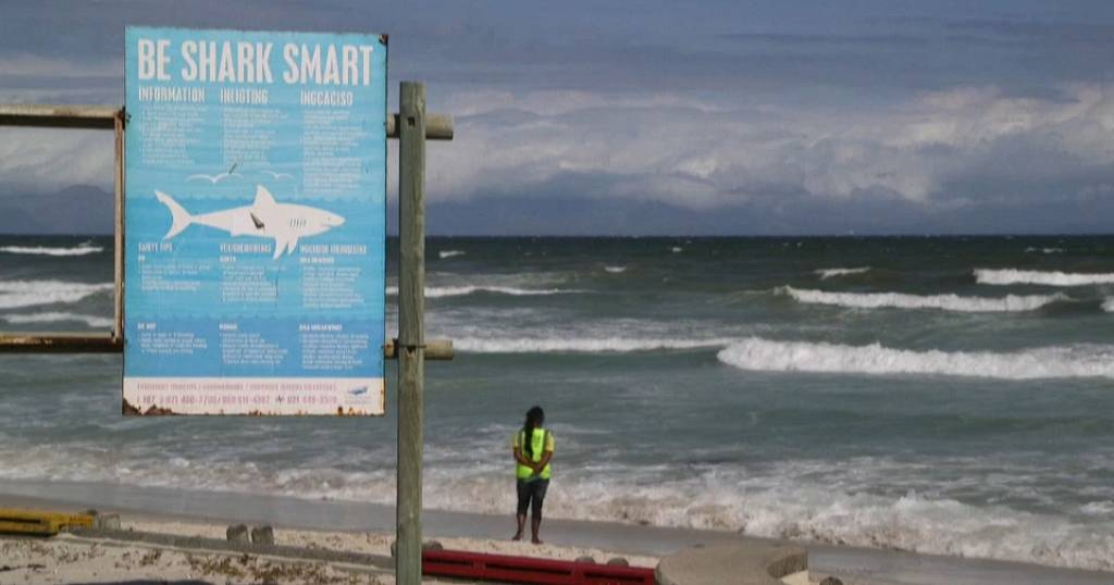 S. Africa: mysterious disappearance of white sharks resolved   Africanews