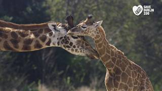 Dublin Zoo has raised €1million in donations