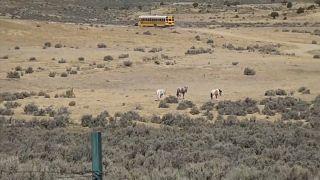 Bus escolar de Arizona
