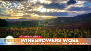 Vineyard in France's Beaujolais region