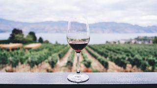 Weinregion des Okanagen Valley in Kanada