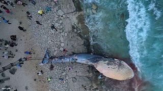لاشه نهنگ پیدا شده در ساحل کیش