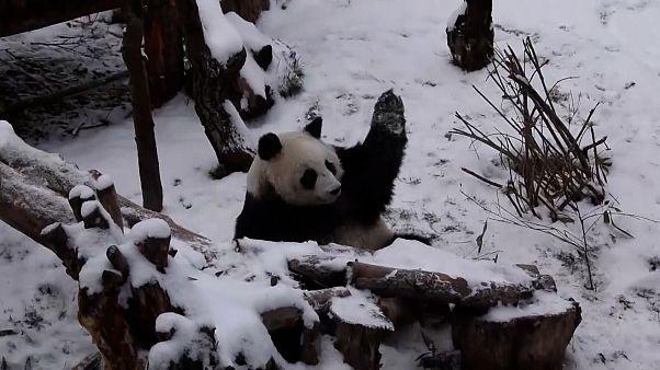 O βαρύς χειμώνας έφτασε σε Ρωσία και Κίνα