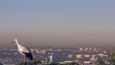 EU air quality improves, but number of deaths linked to air pollution still high