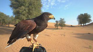 Заповедник в пустыне Дубая: животные и уникальный кемпинг