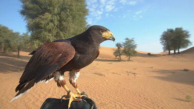 Dubai's desert camping escape