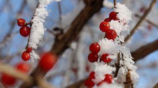 شاهد: الشتاء يُضفي المزيد من الجمال على مقاطعتي هيلونغجيانغ وهونان الصينيتين