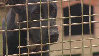Mit Hund: Ausgangssperre austricksen