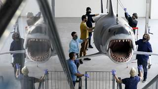 """سمكة قرش ظهرت في فيلم سبيلبيرغ """"دجوس"""" يتم تعليقها في متحف في لوس أنجلس. 2020/11/20"""