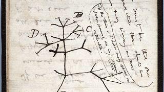 رسم تخطيطي لشجرة الحياة لعام 1837 على صفحة من أحد دفاتر الملاحظات المفقودة للعالم البريطاني تشارلز داروين