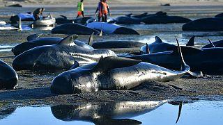 karaya vuran balinalar