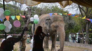 حفلة وداع لفيل في باكستان