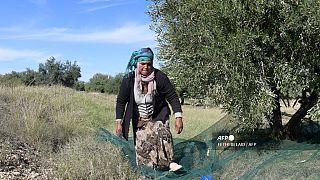 صورة من الأرشيف، عاملة زراعية تونسية