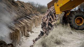 کشتار و دفن مینکها در دانمارک