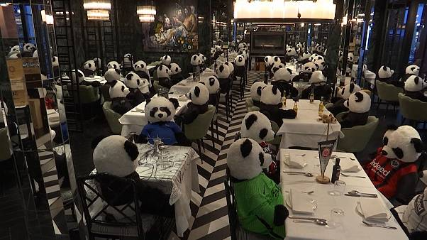 Various of stuffed toy panda bears in restaurant