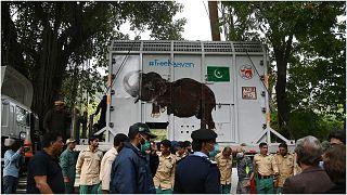الفيل كافان يبدأ رحلته إلى كمبوديا