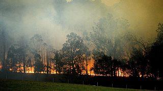 Tűz Új-Dél-Walesben