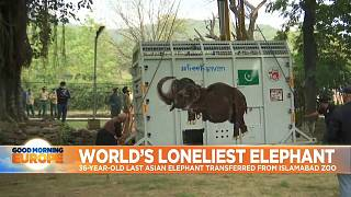 Kaavan, an Asian elephant is transferred from Islamabad Zoo