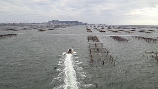 Évtizedeket nyertek a francia tengerparton azzal, hogy dűnéket és hullámtörőt alakítottak ki