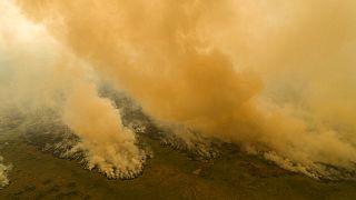 فيديو: وتيرة إزالة غابات الأمازون في أعلى مستوياتها منذ 12 عاما