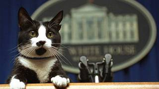 Socks, el gato de Bill Clinton