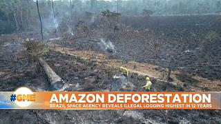 Brazil rain forest burned to the ground