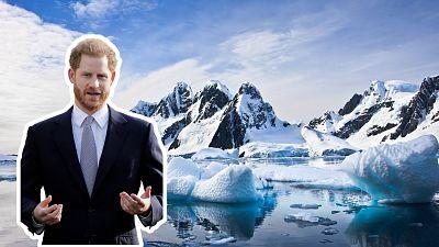 Prince Harry endorses new environmental streaming platform, WaterBear.