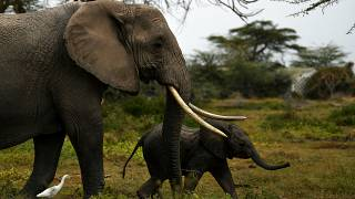 Namibia to sell 170 elephants to protect its wildlife