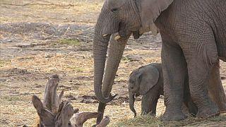 Namíbia elefantes