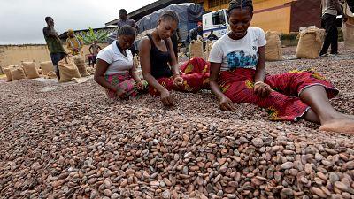 """Les planteurs de cacao menacent de """"boycotter"""" les multinationales"""