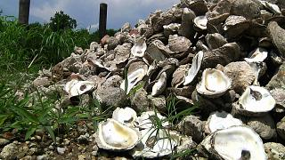 Morocco's Famous Oyster Capital Bursts with a Unique Flavour