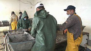 Oualidia produit les meilleures huîtres du Maroc