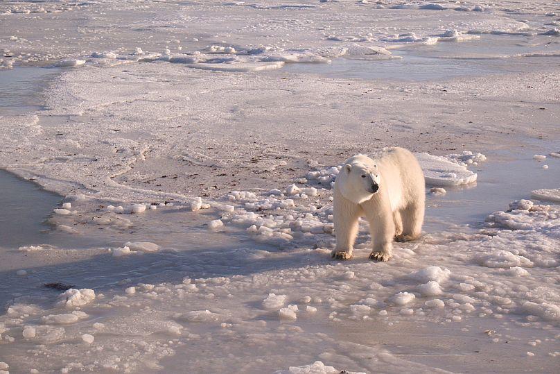 BJ Kirschhoffer/Polar Bears International