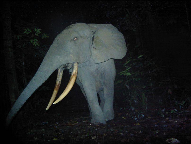 ANPN Gabon