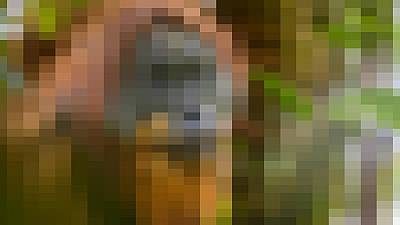 Can you identify the blurred animal in this image?