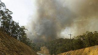 """Australien: Buschfeuer zerstört größte Sandinsel der Welt """"Fraser Island"""""""