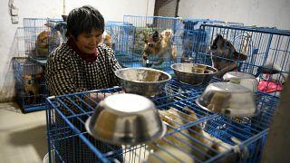 منزل الحيوانات التي تم إنقاذها في تشونغتشينغ في جنوب غرب الصين